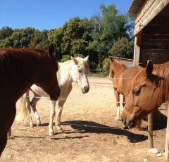 groupe chevaux